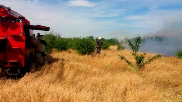 На Херсонщині горять ліс і степ