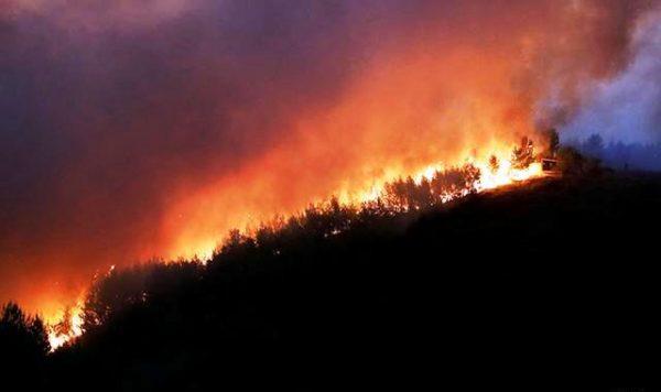Греція не може впоратися з лісовими пожежами