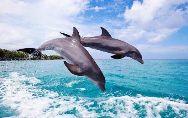 У морях України зросла смертність дельфінів