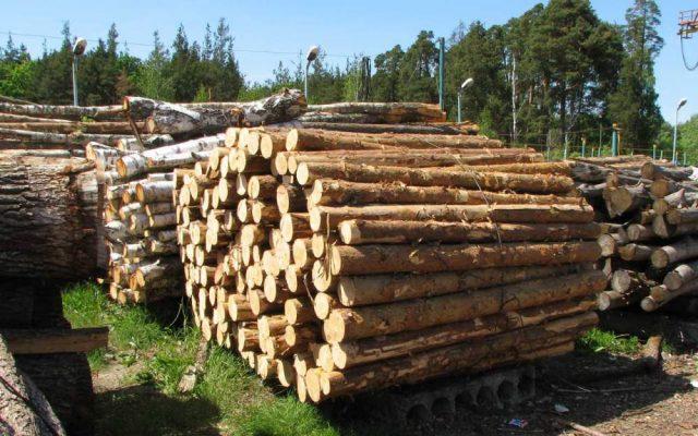 На Львівщині керівник лісопідприємства завдав державі збитків на 2,7 мільйона гривень