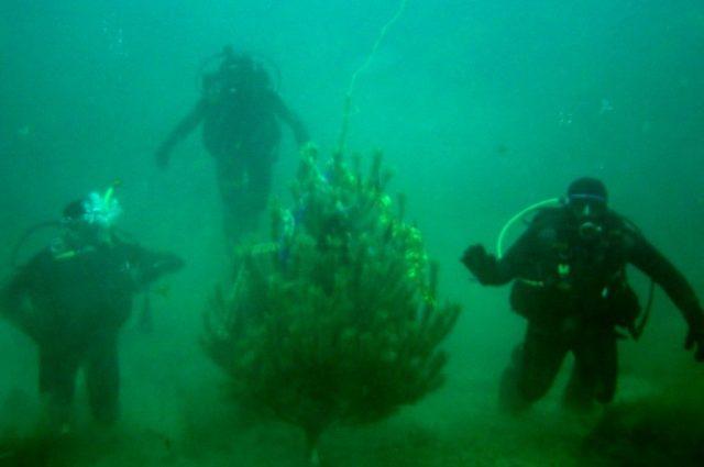 Як ефективно використовувати обладнання для підводного полювання взимку